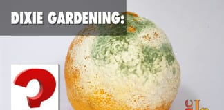 Dixie Gardening How to grow mold?