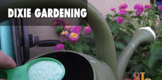 Dixie Gardening fertilizer trees shrubs