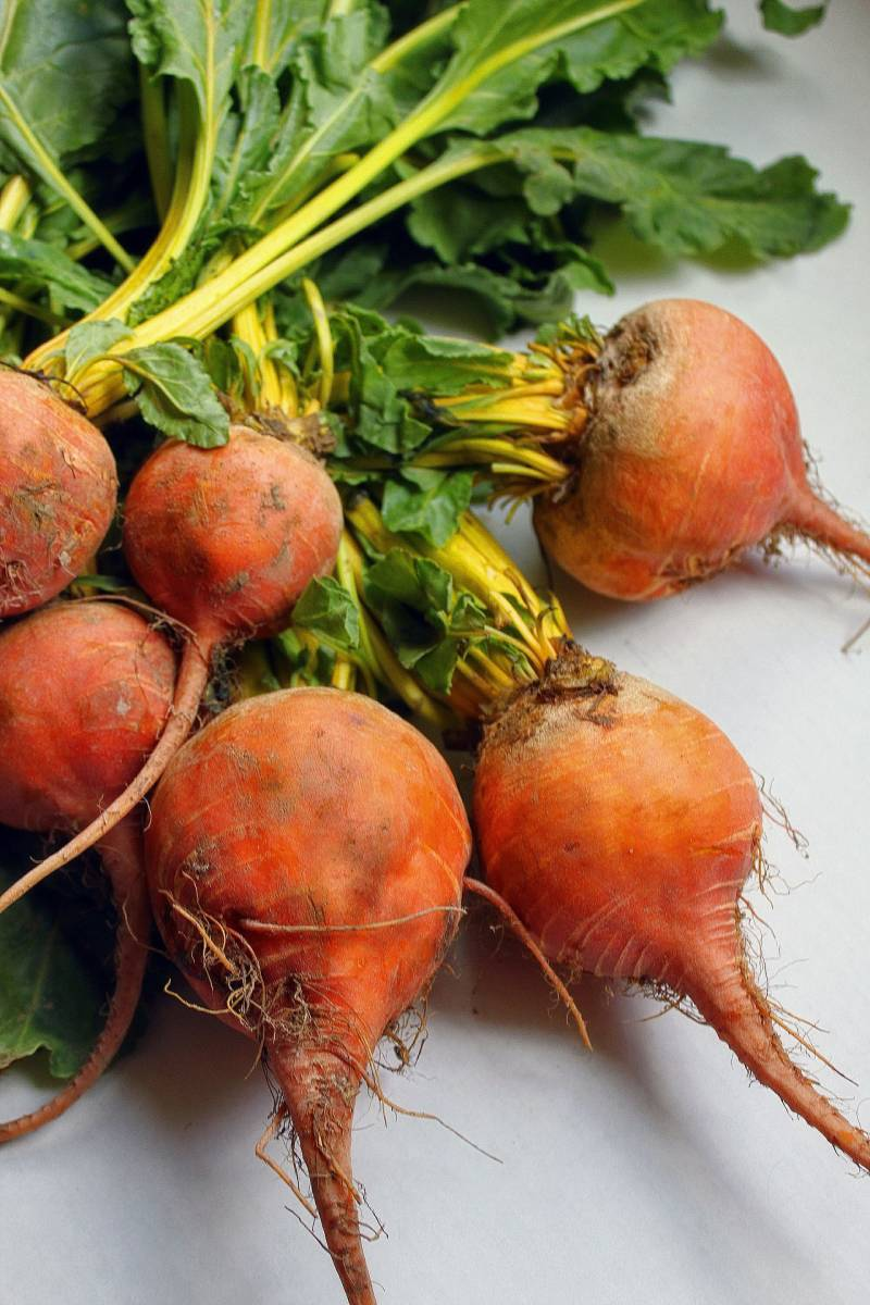 southern utah gardening plant beets in winter for early spring