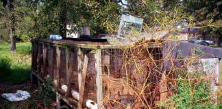 A puppy mill in the rural United States