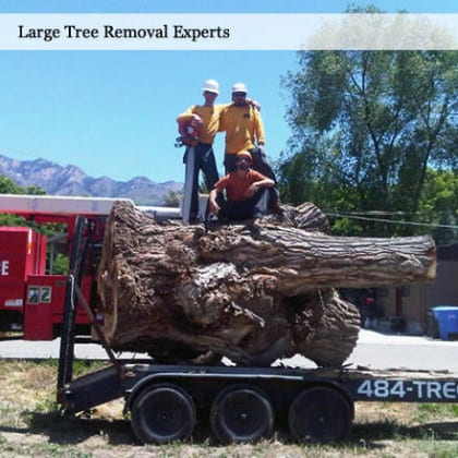 Tree Removal Utah | 10 percent off at Atlas Tree Service in September