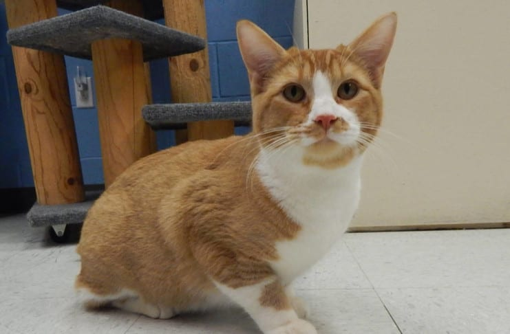 The Independent Southern Utah Adoptable Pets Guide