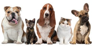 Pet Store St. George southern utah coupon Lovin Arms Pet Center