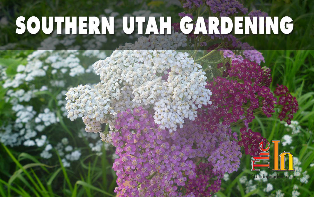 Southern utah gardening nine tried and true water wise perennials southern utah gardening water wise perennials mightylinksfo