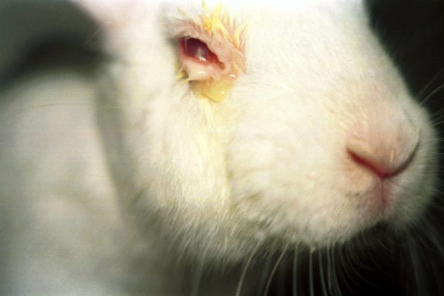 cruelty-free cosmetics animal testing