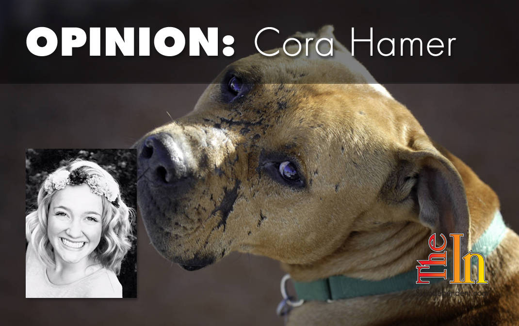 The Champions: DOCUTAH film raises awareness about pit bull welfare