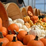southern utah weekend events guide gourds-949112_1920