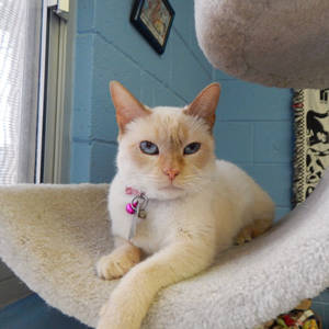 southern utah adopable pets guide Honey Bear
