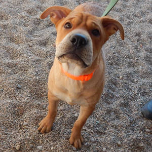 Southern Utah Adoptable Pets Guide Jacks