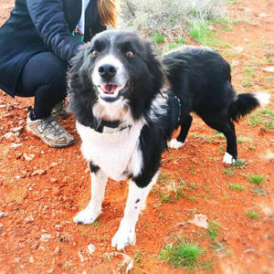 southern utah adoptable pets guide Jake2