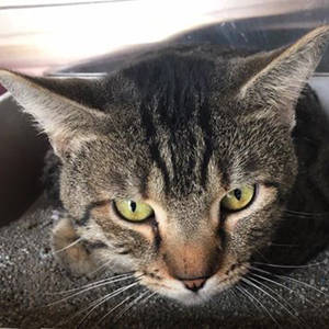 Southern Utah Adoptable Pets Guide Rebel