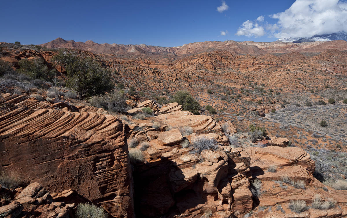 Conserve Southwest Utah, the Conservation Lands Foundation, and The Wilderness Society defend Red Cliffs and Beaver Dam Wash National Conservation Areas.