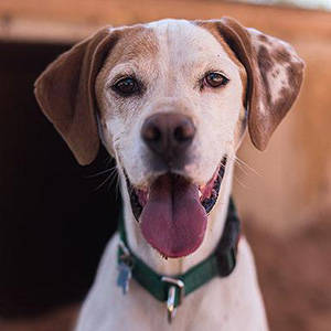 southern utah adoptable pets guide Ted