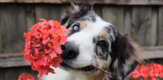 southern utah adoptable pets guide dogflowers