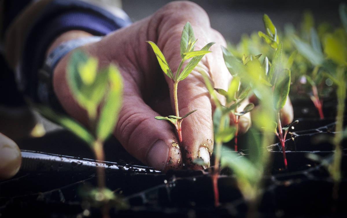 USU Extension launches online gardening courses