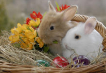 southern utah adoptable pets Easter Basket Rabbit