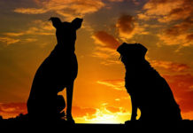 southern utah adoptable pets Dogs Sunset