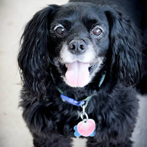 southern utah adoptable pets Shadow