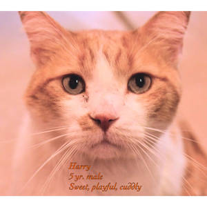 southern utah adoptable pets Harry