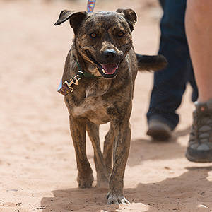 southern utah adoptable pets RockfordWalk