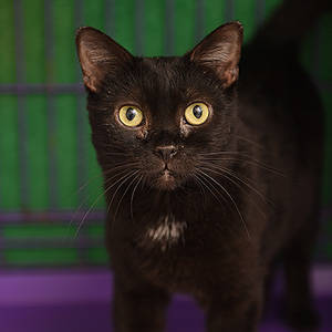 southern utah adoptable pets Butterfly