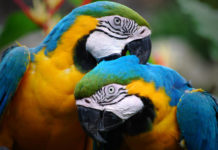southern utah adoptable pets Colorful_Parrots_Couple