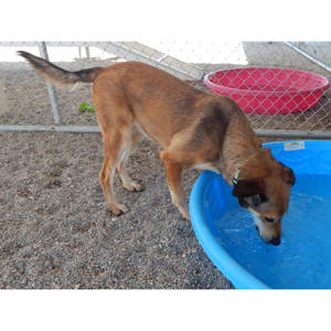 southenr utah adoptable pets Grace