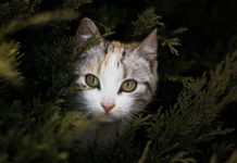 southern utah adoptable pets Cat in tree