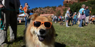 Strut Your Mutt Kanab Best Friends Animal Society