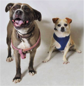southern utah adoptable pets Nikita and Porky