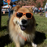 southern utah weekend events Strutt your Mutt