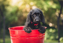 southern utah adoptable pets dog in red bucket