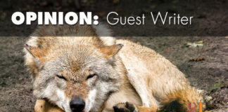 The Mexican Wolf Recovery Plan Kirk Robinson Western Wildlife Conservancy