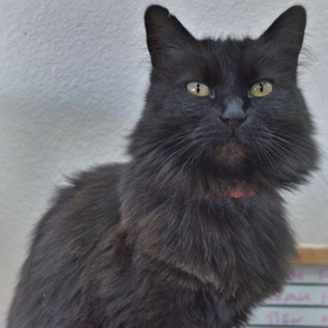 southern utah adoptable pets Lilly1