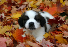 southern utah adoptable pets dog in fall leaves