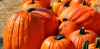 Four reasons why pumpkins are the perfect fall food