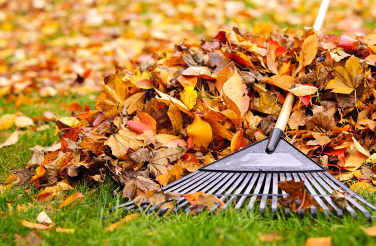 Four areas of focus for fall yard cleanup