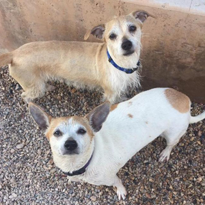 southern utah adoptable pets BanditHermione
