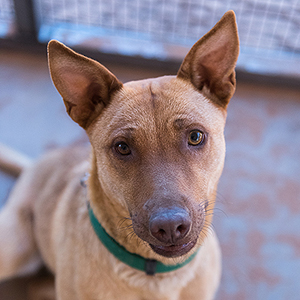 southern utah adoptable pets Cleo