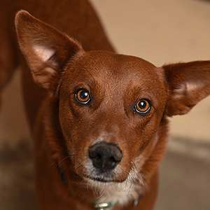 southern utah adoptable pets Red
