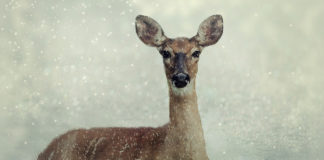 DWR invites photographers, reporters on winter range wildlife patrols, turkey relocations
