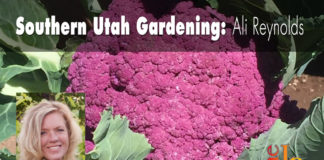 Southern Utah Gardening: Growing cauliflower
