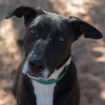 southern utah adoptable pets Quince