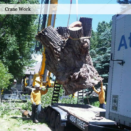 Tree Removal Utah 10 Percent Off At Atlas Service In September