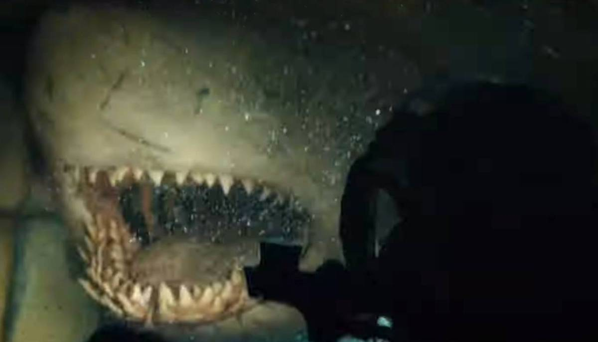 Image result for 47 metres down uncaged