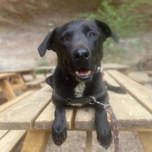 southern utah adoptable pets Roady