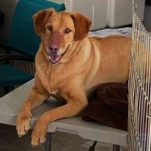 southern utah adoptable pets Piper
