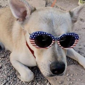 southern utah adoptable pets ACE