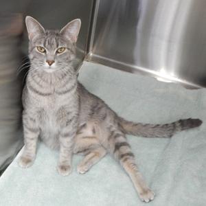southern utah adoptable pets Elsa 3