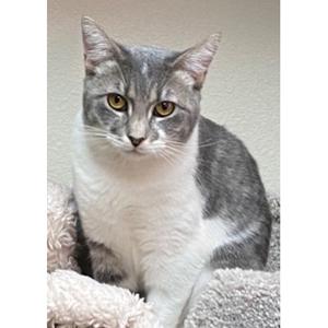 southern utah adoptable pets Lima1